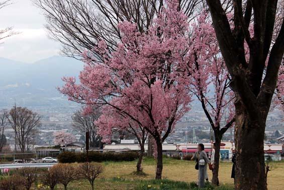 2017_04_08 釈迦堂PA (23)ps.jpg